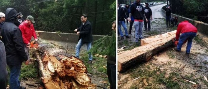 Commuters chop redwood tree